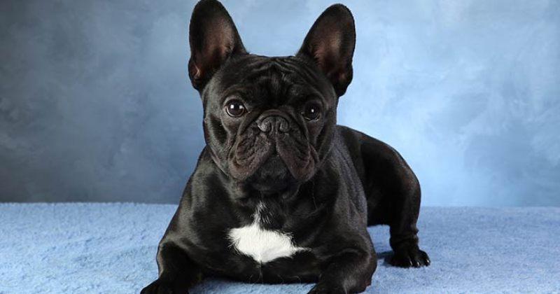 გერმანიაში ოჯახს გადასახადების გადაუხდელობის გამო ძაღლი EBAY-ზე გაუყიდეს