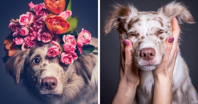 ძაღლები ემოციების გამოხატვის მომენტში - სურათები