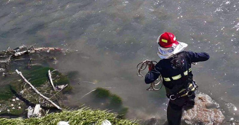 გორში, მდინარე ლიახვში ჩავარდნილი ძაღლი მაშველებმა გადაარჩინეს