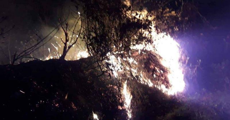 ოზურგეთის ტყეში გაჩენილი ხანძარი ლიკვიდირებულია