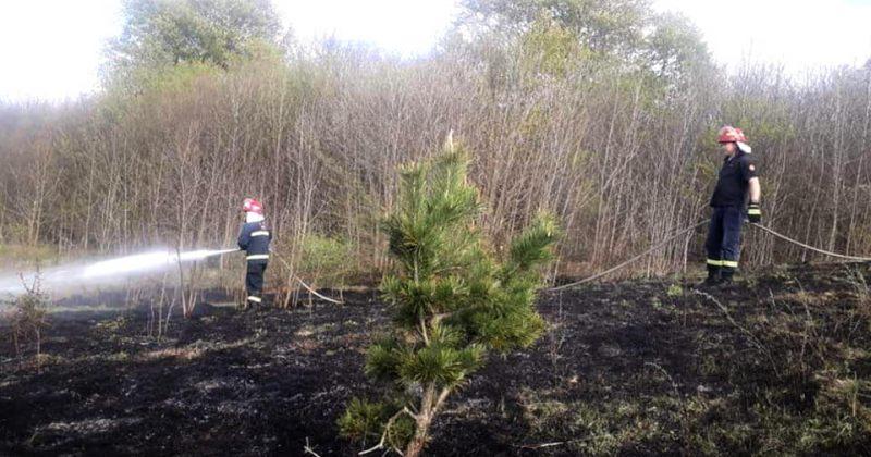 ხაშურში 2 ჰექტარამდე ფართობზე არსებული ხეები და ბალახები დაიწვა