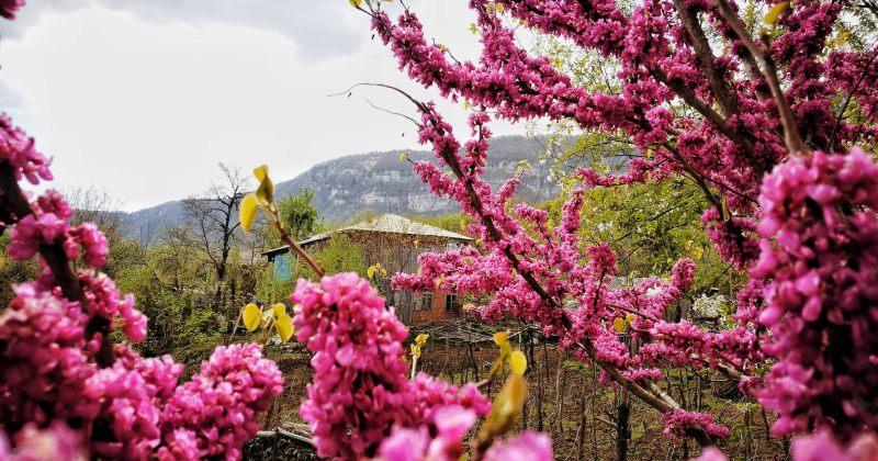 გაზაფხული ლეჩხუმში - ფოტოგალერეა