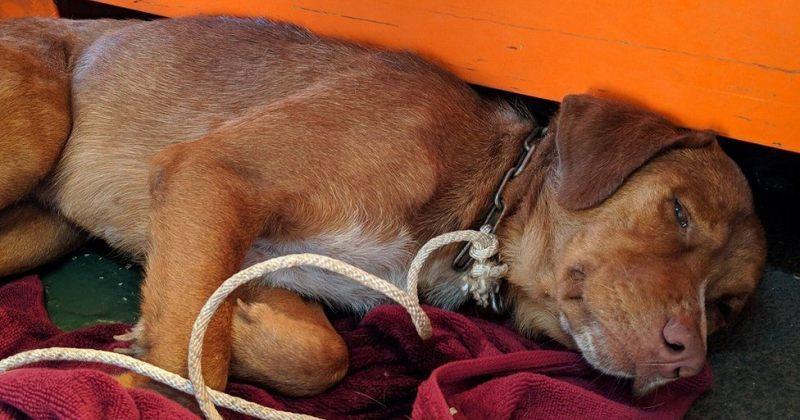 ნაპირიდან 220 კილომეტრის მოშორებით მცურავი ძაღლი ხალხმა სიკვდილს გადაარჩინა
