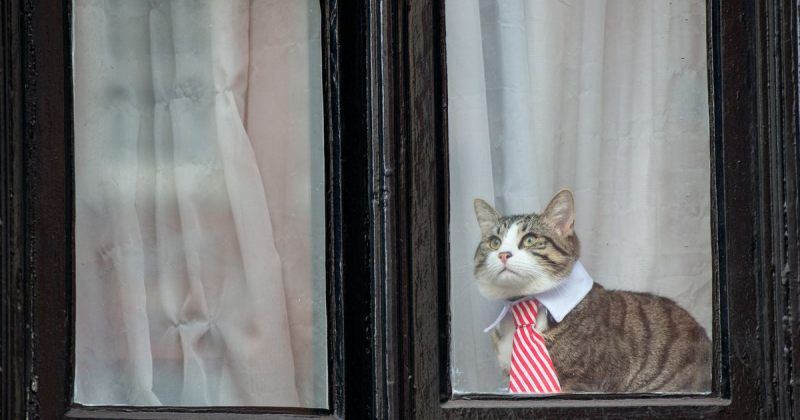 WikiLeaks: ჯულიან ასანჟის კატა უსაფრთხოდაა