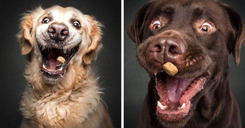 ძაღლები საყვარელი საკვების დაჭერის პროცესში - ფოტოპროექტი