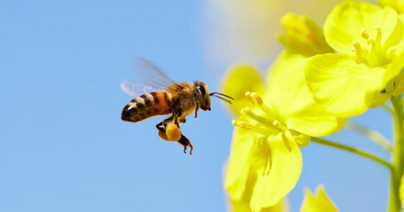 ექიმებმა ტაივანელი ქალის თვალში ოთხი ფუტკარი აღმოაჩინეს