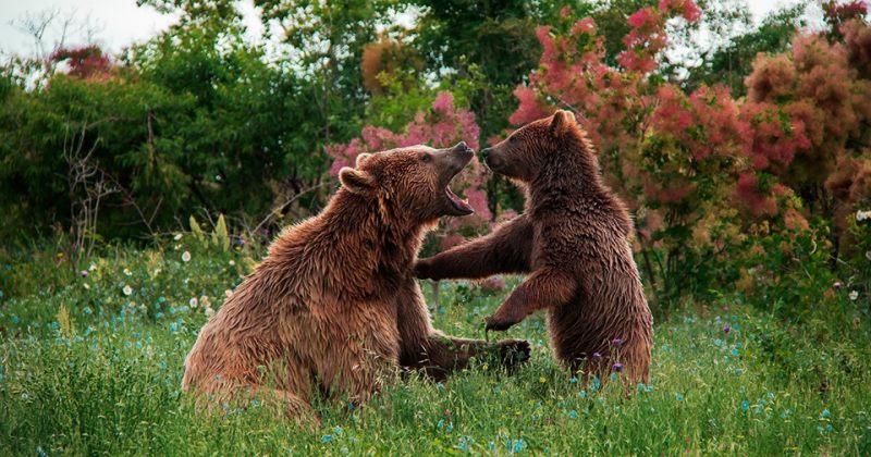 ვინი და კესო - თბილისის ზოოპარკის ყველაზე დიდი და ყველაზე პატარა დათვები