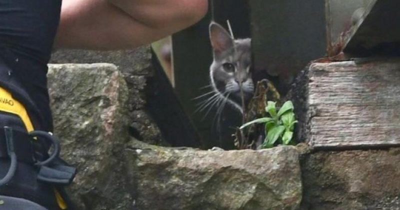 """კატა, რომელიც ხიდზე 6 დღე იყო """"გაჭედილი"""" და მაშველებმა ვერ ჩამოიყვანეს სახლში თვითონ დაბრუნდა"""