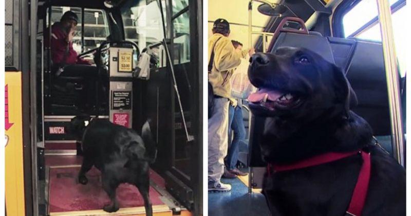 ძაღლი ყოველ დღე ავტობუსით მარტო მგზავრობს, რათა პარკში მივიდეს - ფოტოები
