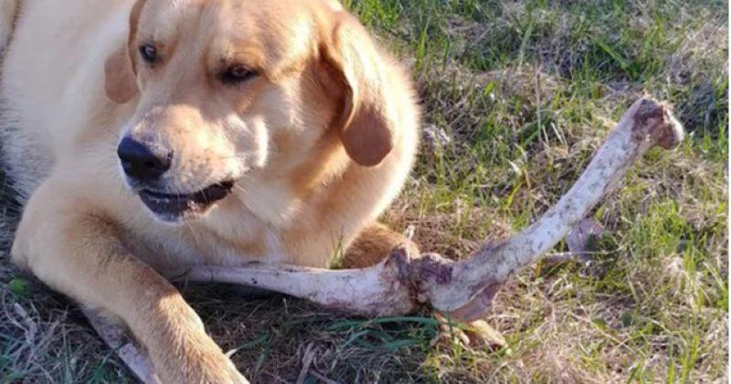 დათვმა ძაღლი ირმის ძვლებით მოისყიდა, რომ პატრონის სანაგვეში ქექვის უფლება მიეცა [ფოტოები]