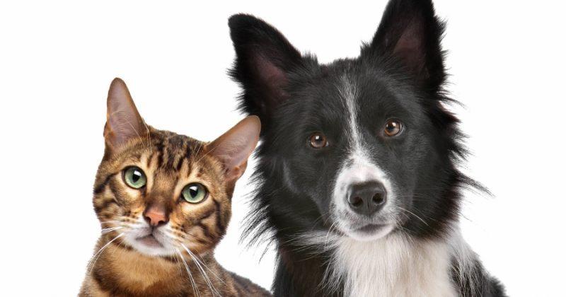 თუ თქვენი შინაური ცხოველი ადამიანს ან ცხოველს დაკბენს/დაკაწრავს, 800 ლარით დაჯარიმდებით