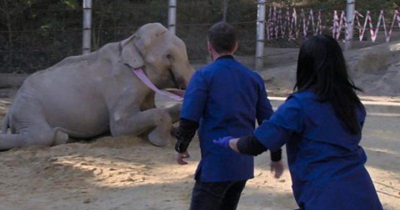 BBC-მ სპილო გრანდის ოპერაციაზე გადაღებული ფილმის თიზერი გაავრცელა [Video]