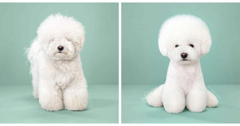 ძაღლები გაკრეჭვამდე და შემდეგ - ფოტოგალერეა