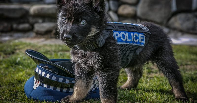 ახალი ზელანდიის პოლიციას აუდიტის კომპანიამ უთხრა, რომ ძაღლების სურათები აღარ დაპოსტონ