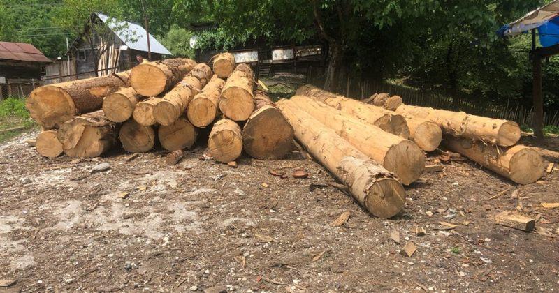 ხუთ თვეში ხე-ტყის უკანონო მოპოვებისა და ტრანსპორტირების 1121 ფაქტი დაფიქსირდა