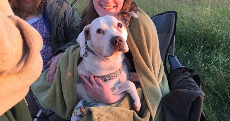 ქალმა ძაღლთა თავშესაფარი გახსნა, სადაც მხოლოდ მომაკვდავ ძაღლებს უვლის - ფოტოები