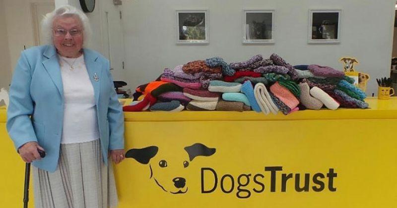 დიდ ბრიტანეთში, 89 წლის ქალმა თავშესაფრის ძაღლებისთვის 450 საბანი მოქსოვა