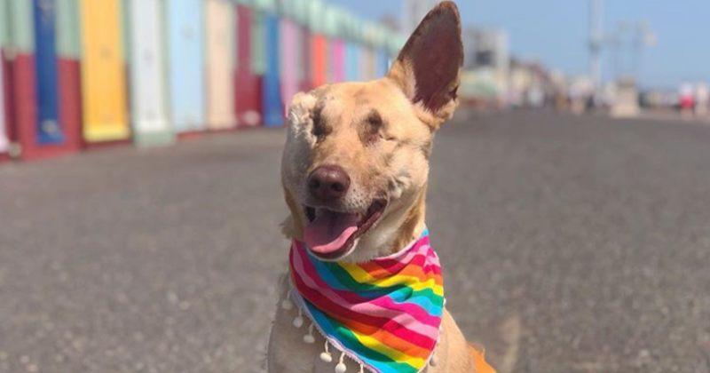 ძაღლს, რომელსაც 17-ჯერ ესროლეს, ახლა პატრონი ჰყავს და ხალხს თერაპიაში ეხმარება
