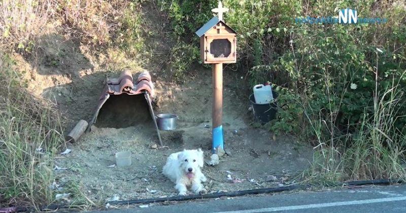 ბერძენი ჰაჩიკო - ძაღლს მე-19 თვეა არ დაუტოვებია ადგილი, სადაც მისი პატრონი ავარიაში დაიღუპა