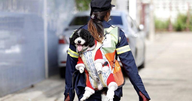 ტაილანდელი მეეზოვე სამსახურში თავის ძაღლს ატარებს [გალერეა]