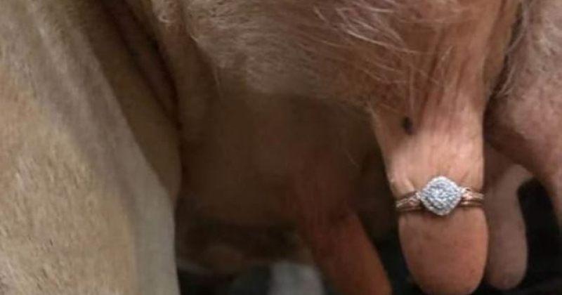 ფერმერმა შეყვარებულს ხელი ძროხის ჯიქანზე გაკეთებული ბრილიანტის ბეჭდით სთხოვა