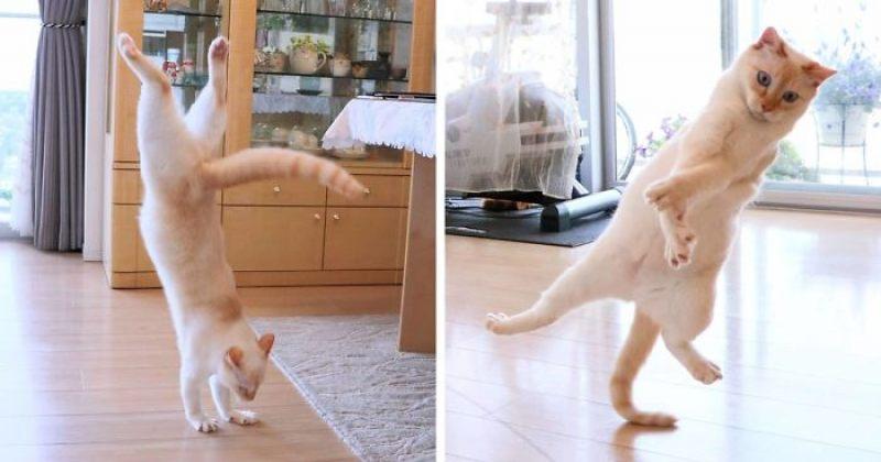 გაიცანით ჩაკო - ნინძა კატა იაპონიიდან [ფოტოები]