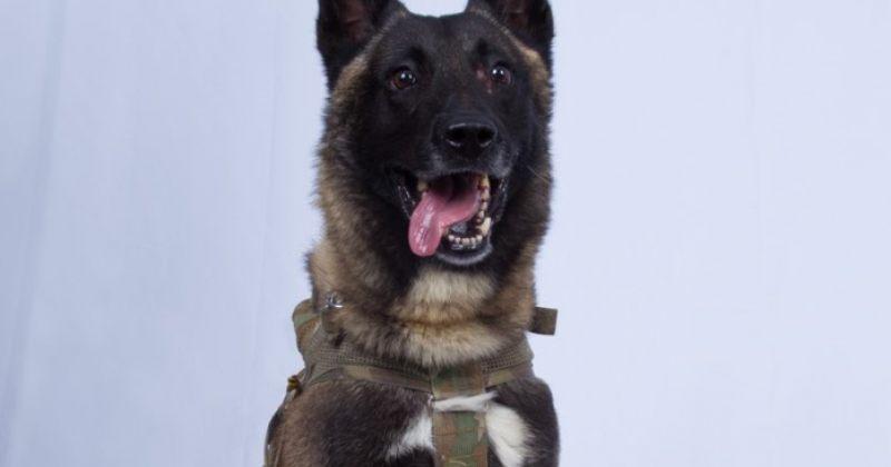 დონალდ ტრამპმა იმ ძაღლის ფოტო გამოაქვეყნა, რომელიც ალ-ბაღდადის ლიკვიდაციაში მონაწილეობდა