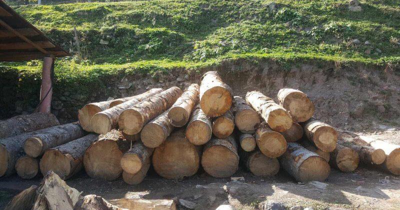 ოქტომბერში ხე-ტყის უკანონო მოპოვებისა და ტრანსპორტირების 594 ფაქტი გამოვლინდა