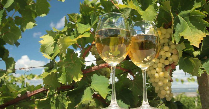 ივლისში ღვინის ექსპორტი 36%-ით გაიზარდა