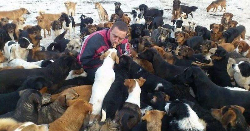 სერბეთში კაცმა 4 მიტოვებული ლეკვი იპოვა და თავშესაფარი გახსნა - ის ახლა 750 ძაღლს უვლის