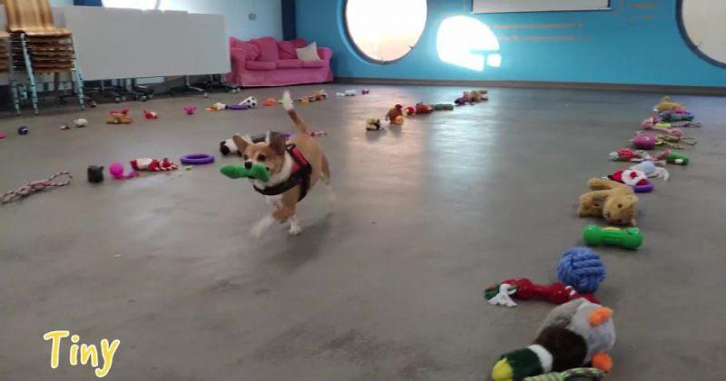ირლანდიაში თავშესაფრის ძაღლებმა საახალწლო საჩუქრები თვითონ აარჩიეს - ვიდეო