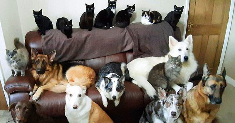 მრავალი მცდელობის შემდეგ ქალმა თავის 17-ვე ცხოველს ერთად სურათი გადაუღო