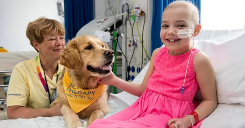 ძაღლები ბავშვებს  მკურნალობის პროცედურების გავლაში ეხმარებიან