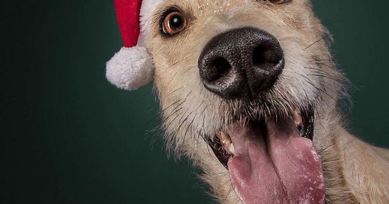 ფოტოგრაფმა ძაღლებს საახალწლო სურათები გადაუღო