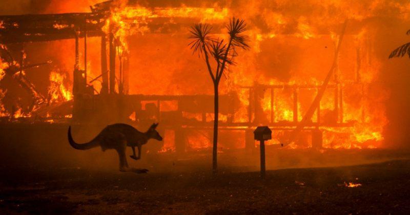 ავსტრალიაში ხანძრებს მილიარდზე მეტი ცხოველი ემსხვერპლა