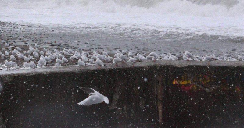 ბათუმის თოვლიანი სანაპირო დღეს - ფოტოები