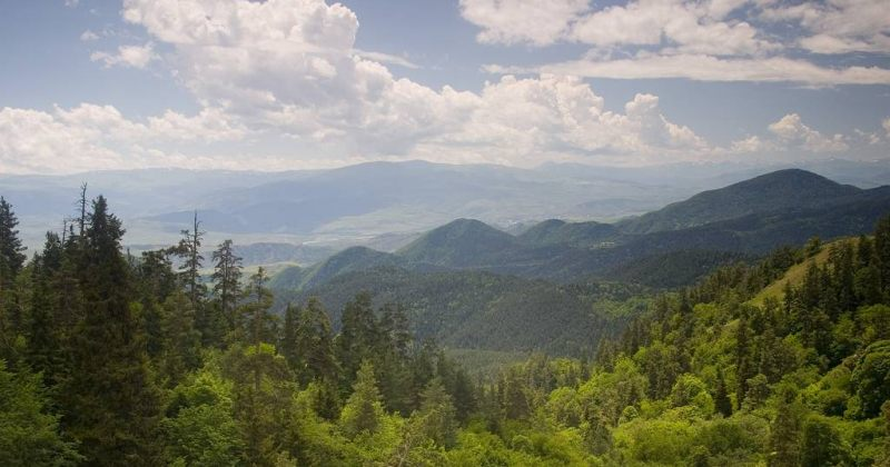 EMC: ტყეებზე ინიციატივას, სავარაუდოდ, წინასაარჩევნოდ საპატრიარქოსგან ლოიალობის ინტერესი აქვს