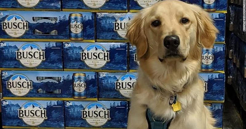 Busch ლუდს აჩუქებს მათ, ვინც COVID-19-ის დროსცხოველთა თავშესაფრიდან უპატრონო ძაღლს შეიფარებს