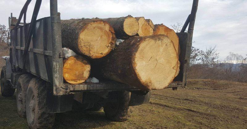 2020 წლის თებერვალში ხე-ტყის მოპოვების და ტრანსპორტირების 390 უკანონო ფაქტი გამოვლინდა
