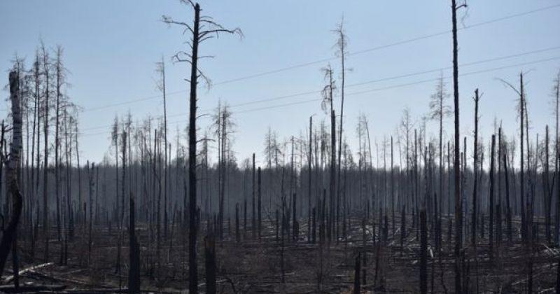 უკრაინის შინაგან საქმეთა სამინისტრო: ჩერნობილში ტყის ხანძარი ჩავაქრეთ