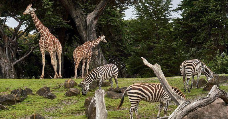 გერმანიის ზოოპარკს გადასარჩენად, შესაძლოა, ცხოველების ერთმანეთით გამოკვება დასჭირდეს