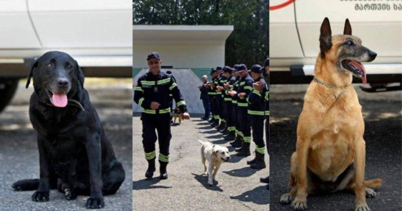 მაშველი ძაღლები ფანი, ჯესი, ბელა, სალი, ბინგო და რეი სამსახურიდან გააცილეს [გალერეა]