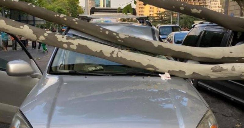 ვაკეში ხის წაქცევის შედეგად დაზიანდა 2 მანქანა, მსუბუქად დაშავდა 1 პირი