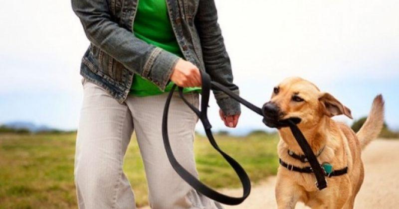 ძაღლის ფეკალიით ტერიტორიის დაბინძურებისთვის მეპატრონე 50-ის ნაცვლად 100 ლარით დაჯარიმდება
