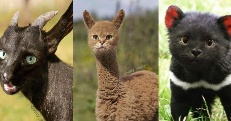როგორი იქნებოდნენ ცხოველები, კატის სახე რომ ჰქონოდათ [გალერეა]