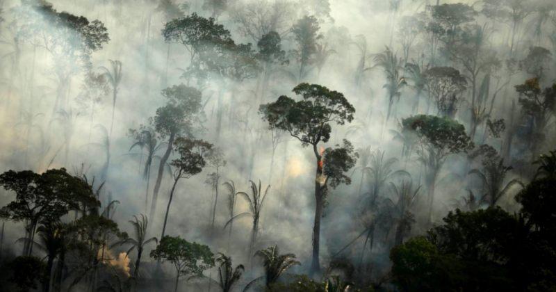 ივლისში ამაზონის ტყეებში აქტიური ხანძრის კერების რიცხვი 28%-ით გაიზარდა