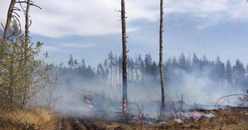 აღმოსავლეთ უკრაინაში ტყეში ხანძრის შედეგად 4 ადამიანი დაიღუპა, 10 დაშავდა