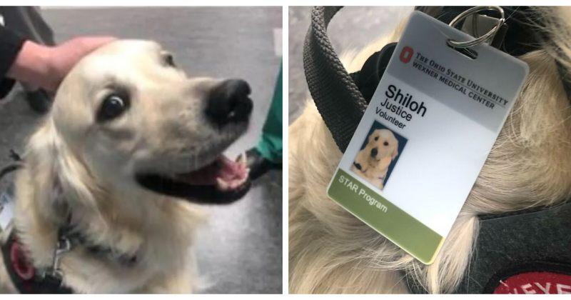 ოჰაიოს სამედიცინო ცენტრმა ძაღლი მოხალისედ აიყვანა