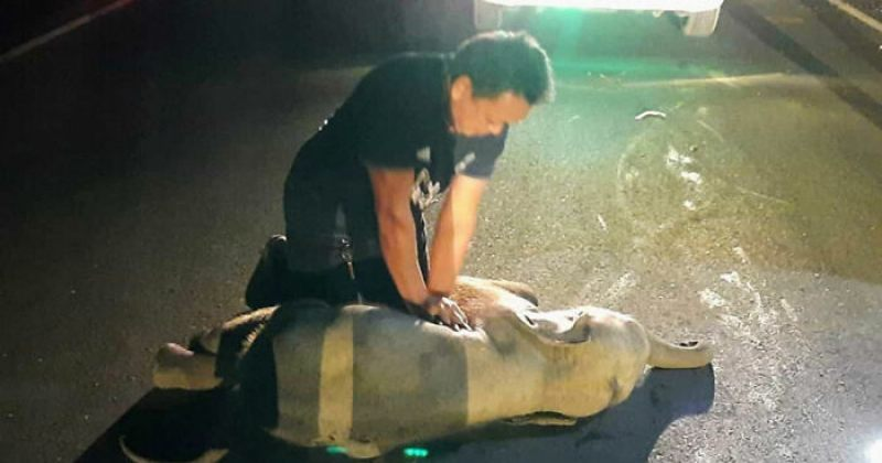 ტაილანდელმა მაშველმა სპლიყვი სიკვდილს გადაარჩინა