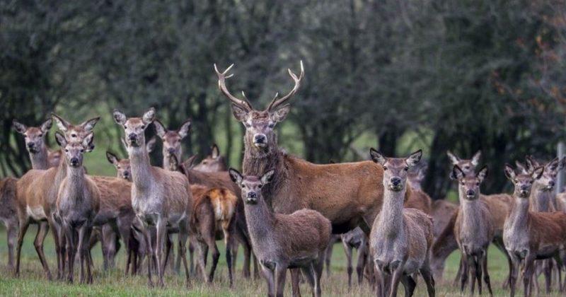 პორტუგალია აღშფოთებას გამოხატავს მას შემდეგ, რაც ესპანელებმა 500 გარეული ცხოველი მოკლეს